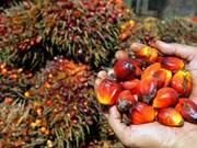 越南与印度尼西亚加强纸张和棕榈油贸易合作