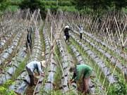 越南为合作社发展营造便利环境
