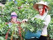今年前7个月越南对阿尔及利亚出口额近2.09亿美元