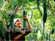 2017年越南种植业增长率可达2%以上