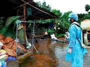 越南南部各省市努力防控登革热病疫情