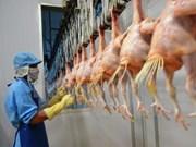 越南首批鸡肉将于本月9日出口日本