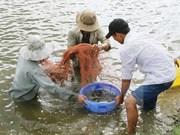 努力推动越南虾产业可持续发展