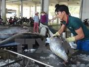 今年前8月越南水产捕捞产量增加