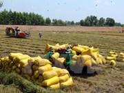 芹苴市与澳大利亚企业合作 提升大米出口能力