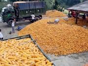 越南每年出资17亿美元来进口玉米