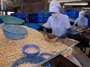 越南腰果仁出口额猛增