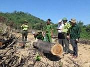 阮春福要求对平定省破坏森林案进行公正客观的调查 尽快查明真相