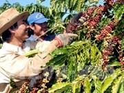 越南对阿尔及利亚出口增长26%