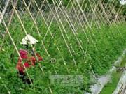 缩短贫富差距——越南在新发展道路上的目标