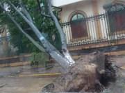 第十号台风登陆广平省 造成7人死亡和受伤