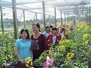 胡志明市努力促进高科技农业旅游可持续发展