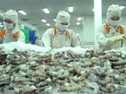 欧盟成为越南虾的最大进口市场