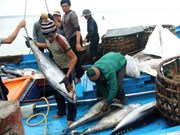 越南前九月水产捕捞量同比增长5.2%