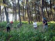 截至目前越南森林环境服务费收入超1万亿越盾
