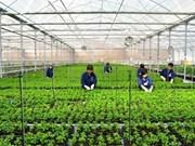 海防市进行高科技农业区规划