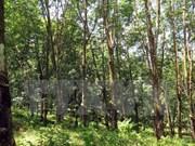 越南广治有限责任公司与老挝政府签署橡胶种植土地租赁合同