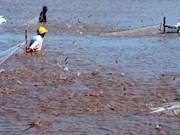 越南海洋岛屿:越南坚江省昏德县沿海地区南美白对虾养殖业