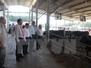 越南与日本开展和牛养殖合作项目