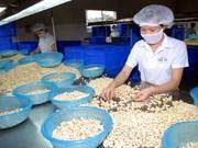 2017年越南腰果出口额约达35亿美元