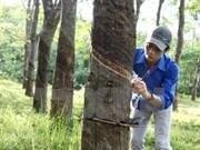 政府副总理王廷惠批准越南橡胶工业集团股份制改革方案