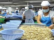 越南腰果出口额达35亿美元创新高纪录