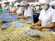 越南腰果协会协助柬埔寨提高腰果产量