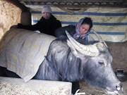 低温严寒天气来袭  2千多头家畜被冻死