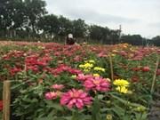 同塔省沙沥村独特花卉盆景吸引游客青睐