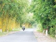 同塔省收集和种植60多种竹子