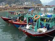 """越南积极处理欧洲理事会对越南渔业水产品发出""""黄牌""""警告"""