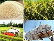 2018年越南大米出口量有望达650万吨