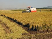 2017-2018年越南南部地区冬春季农作物产量达逾1110万吨
