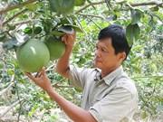 槟椥省省绿皮柚子获得地理标志认证