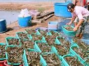 第二次越南虾业技术展览会即将举行