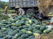 广义省与中国企业签署西瓜和其他农产品销售合作协议