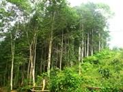 富安省人工林木材产量翻一番