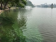 河内市在还剑湖重放绿藻