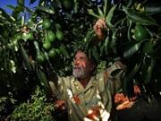 越南与墨西哥农业领域合作潜力巨大