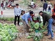莱州省:越中缔结友好村寨模式带来诸多实际效果