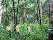 有关保护和发展森林的违法案件大幅下降