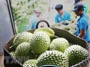 泰国出口连续14个月增长