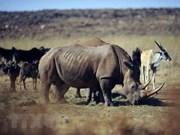 预防非法买卖野生动物微电影比赛即将启动