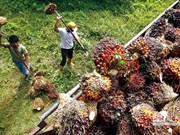 今年5月份印尼出口呈猛增态势