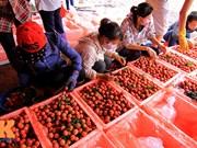 越南北江荔枝远销30多个国家和地区