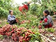 上半年越南蔬果出口额达到20亿美元