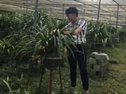 佐肥乡居民靠种植大花蕙兰脱了贫