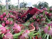 使越南农产品在韩国市场站稳脚跟