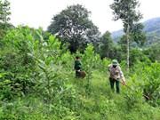 全国补植林地面积为5.6952万公顷