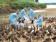全国甲型H5N6 禽流感疫区为3个